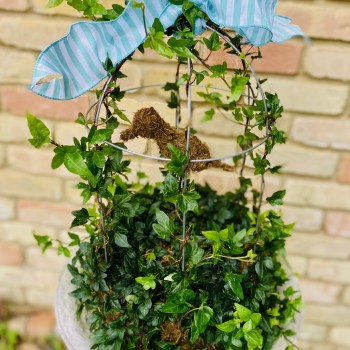 English Ivy Birdcage Topiary